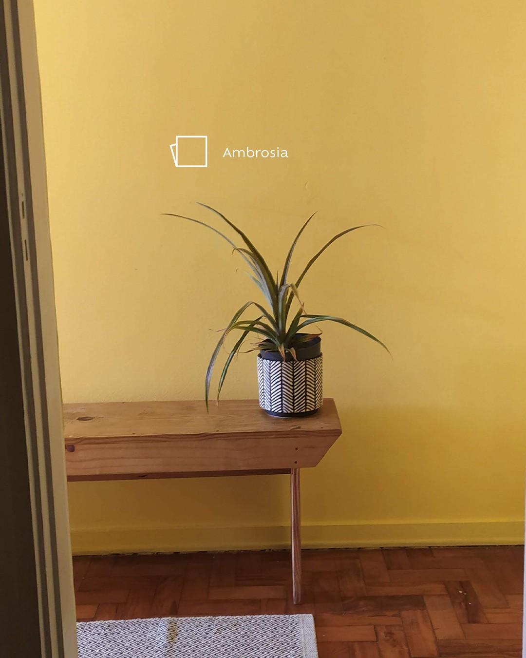 Foto de ambiente com foco em um banco longo de madeira com um vaso de planta em cima. Ao fundo, parede pintada na cor Ambrosia e o ícone de cor. Os tons amarelos são perfeitos para alegrar o ambiente, não é mesmo? Dá uma olhada em como ficou o resultado desse desafio!